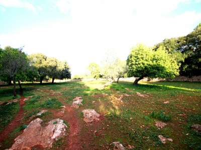 Image 4 | Plot of land for sale with 2 hectares of land, Costitx, Central Mallorca, Mallorca 214109