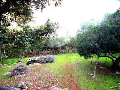 Image 7 | Plot of land for sale with 2 hectares of land, Costitx, Central Mallorca, Mallorca 214109