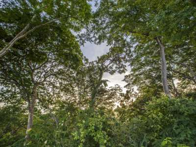 Image 12 | Plot of land for sale with 14 hectares of land, Playa Negra, Guanacaste 214635