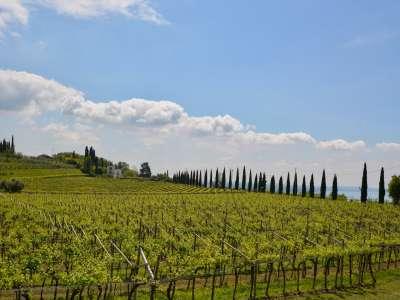 Image 29 | 3 bedroom apartment for sale with 87m2 of land, Bardolino, Verona, Lake Garda 216872