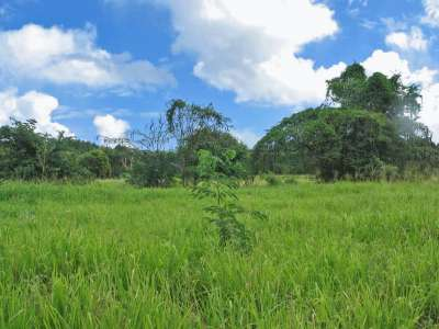 Image 3 | Plot of land for sale with 9.71 hectares of land, Saint Peter 217738