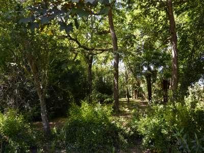 Image 9   6 bedroom manor house for sale, Saint Emilion, Gironde , Aquitaine 223372