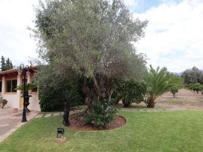 Image 8 | 4 bedroom villa for sale with 1.63 hectares of land, Son Sardina, Palma Area, Mallorca 223952