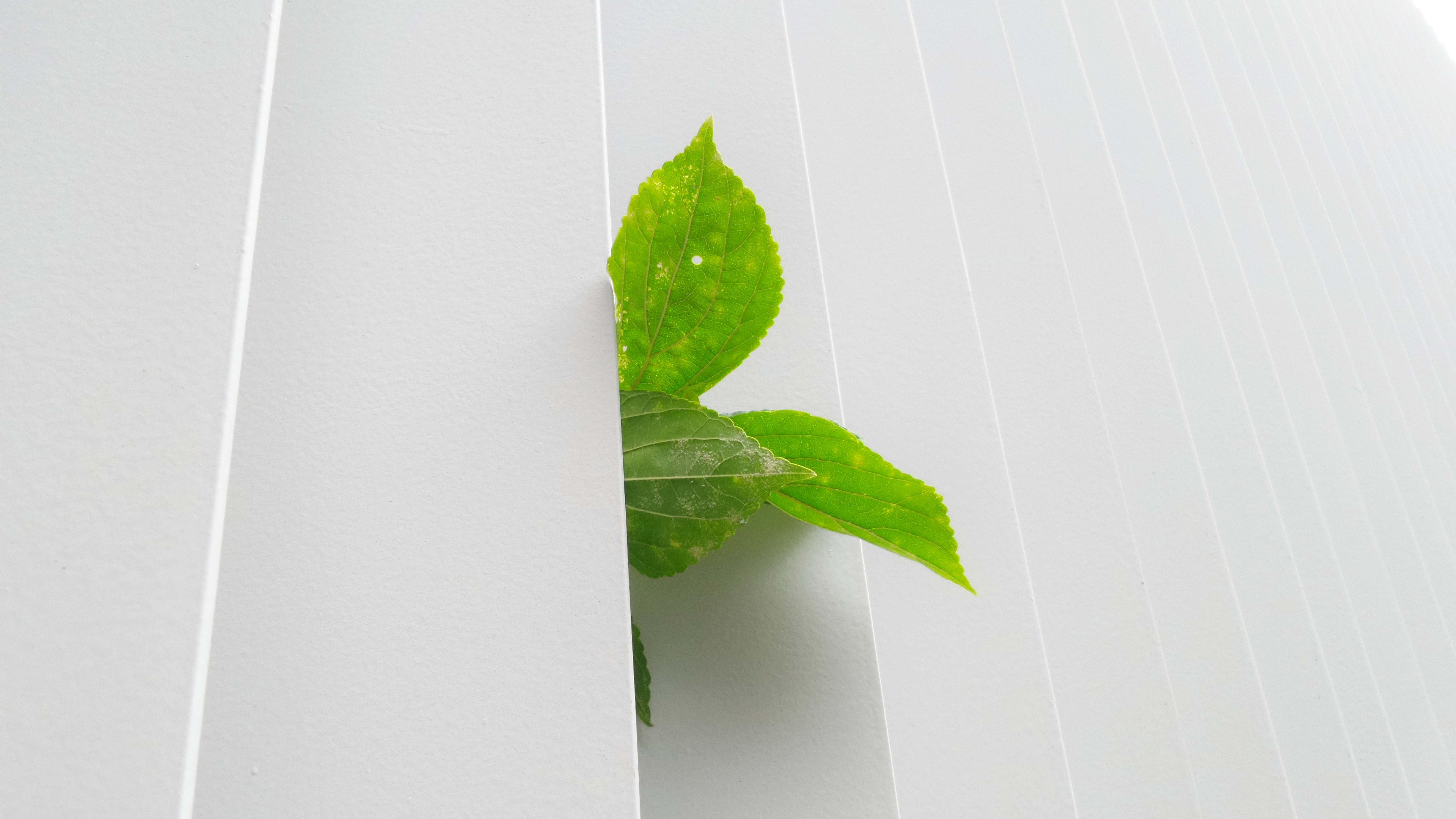 Top des promoteurs écologiques pour l'achat de sa maison