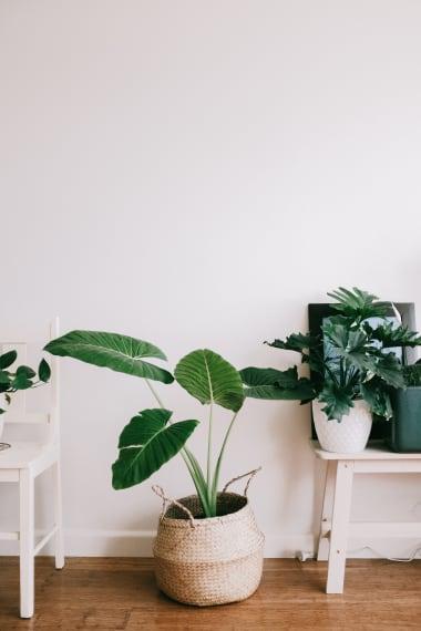 website/content/cadeaux-noel-proprietaire-plante-dinterieur