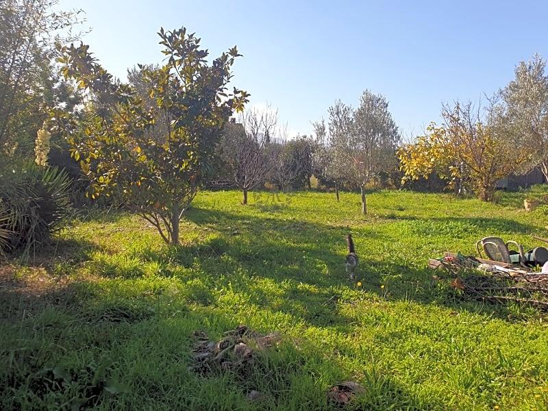 RARE, havre de verdure à Palau Del Vidre