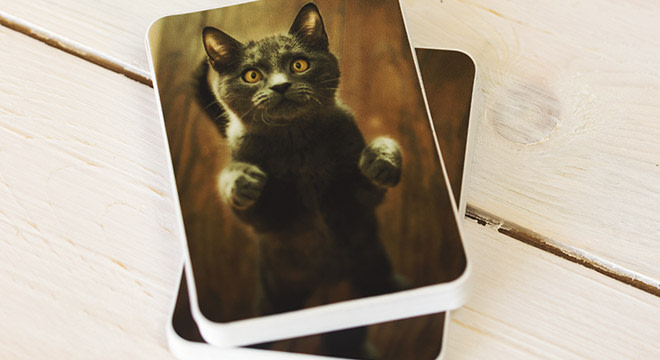 cat-stickers-image-1