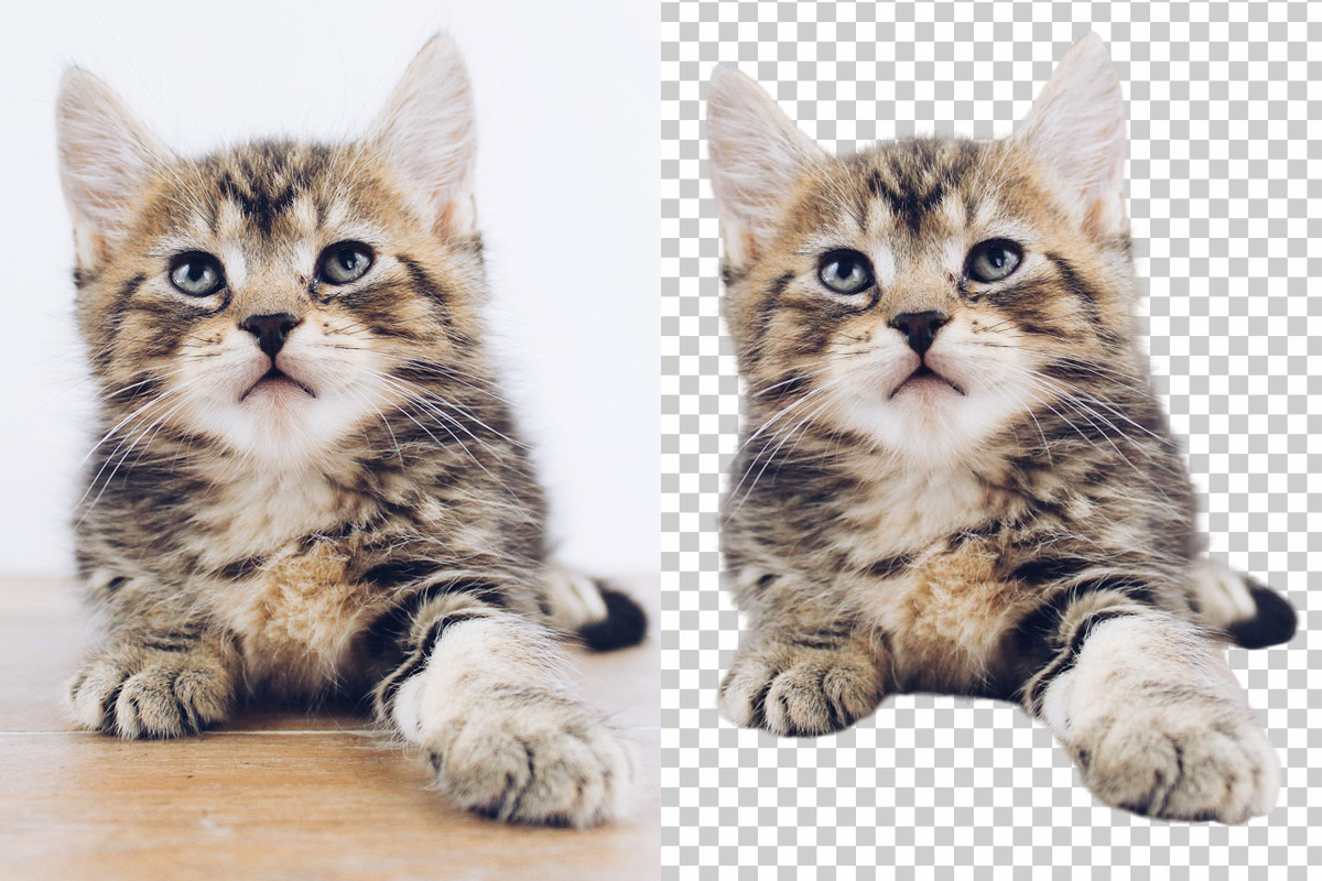 Trace removes background from photo of cat