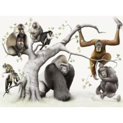 The Gorillas Den: Large size image