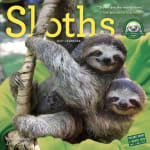 2017 Sloth Calendar!