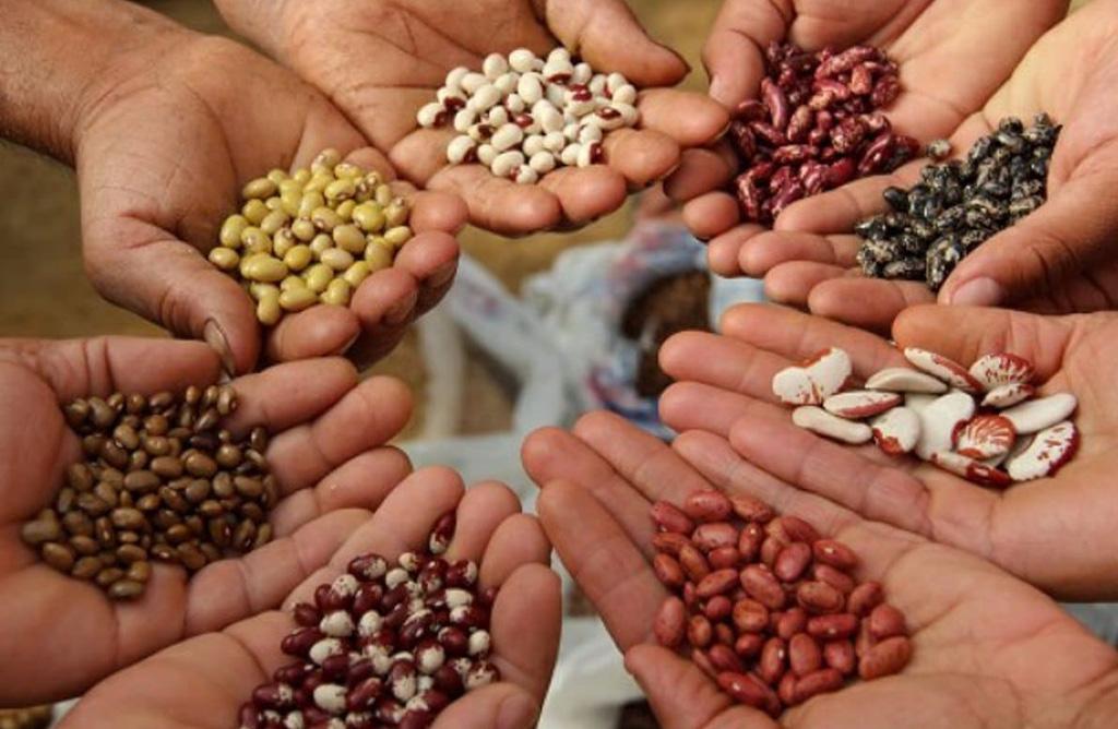 La alimentación: 3. El poder de la semilla