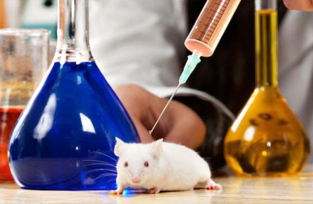 Experimentación científica (animales vs humanos)