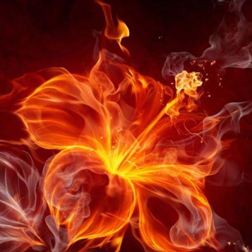La Flor que Amaba el Fuego