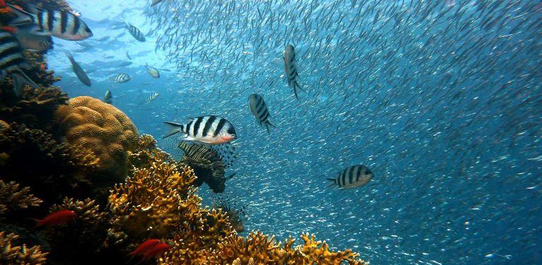 plongée sur épave croatie sous marine