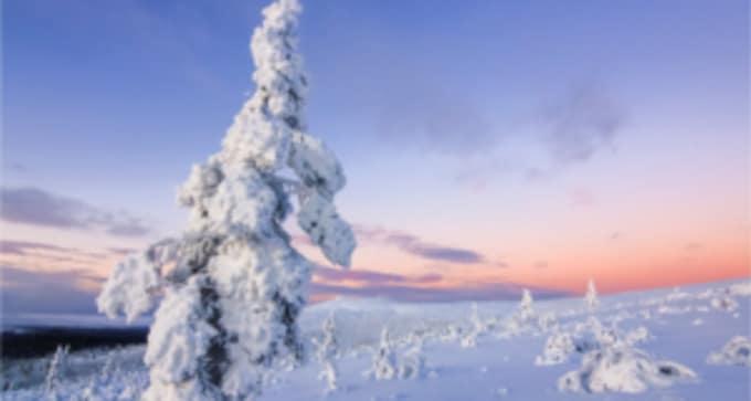 Jour 6 : Saariselkä / Ivalo / Chez vous - Je rentre à la maison , des étoiles plein les yeux !
