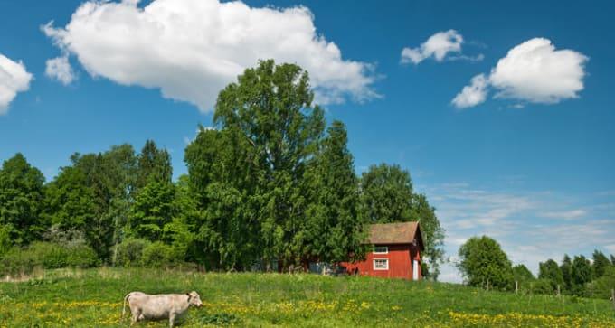 Jour 7 :  Rukatunturi / Rovaniemi (250 km)