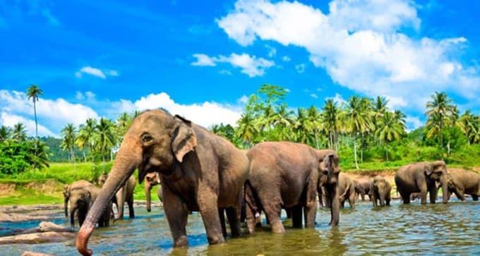 Circuit Famille au Sri Lanka