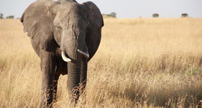 Voyage et safari dans le grand sud tanzanien