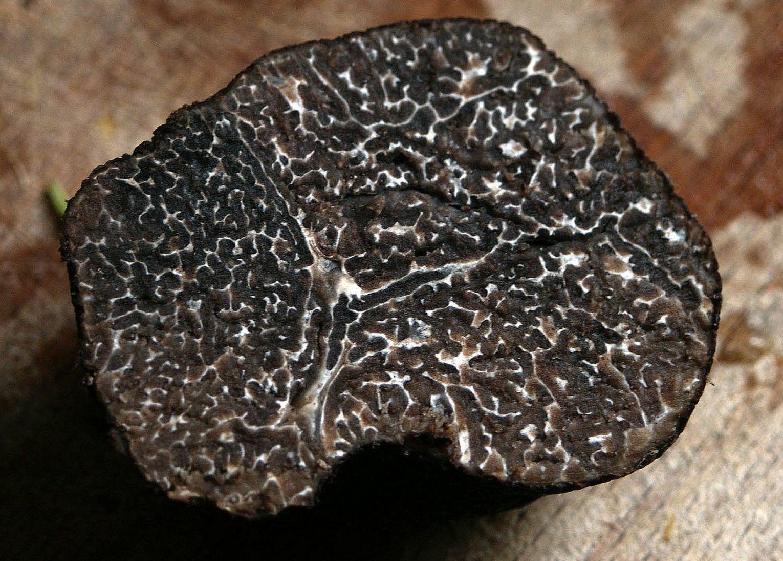 truffe noire croatie dégustation