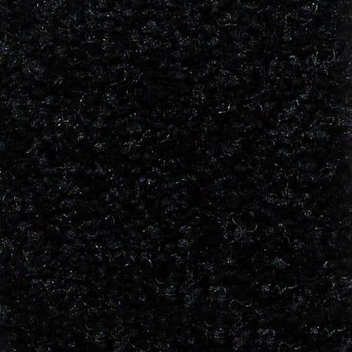 Behold Coal Black  55502