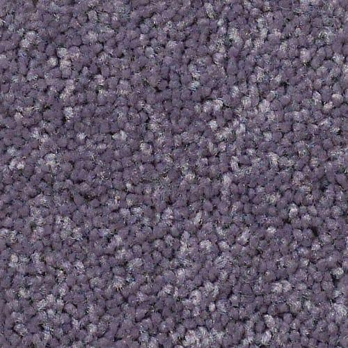 Behold Violet Crush  930