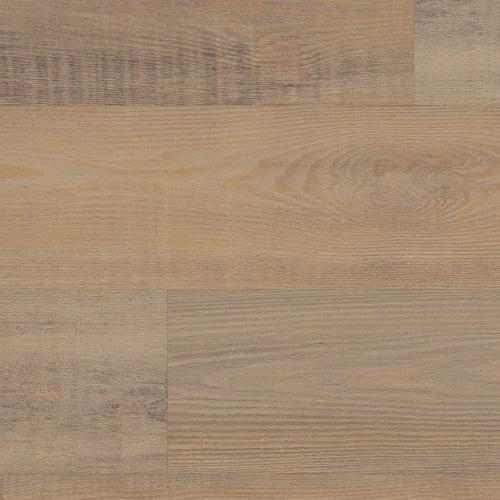 Privet Pine