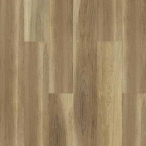 Shawshank Oak
