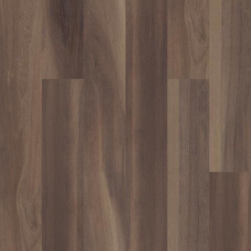 Ravine Oak