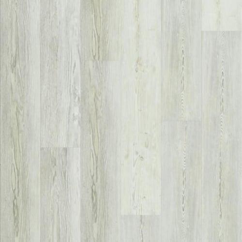 Century Pine