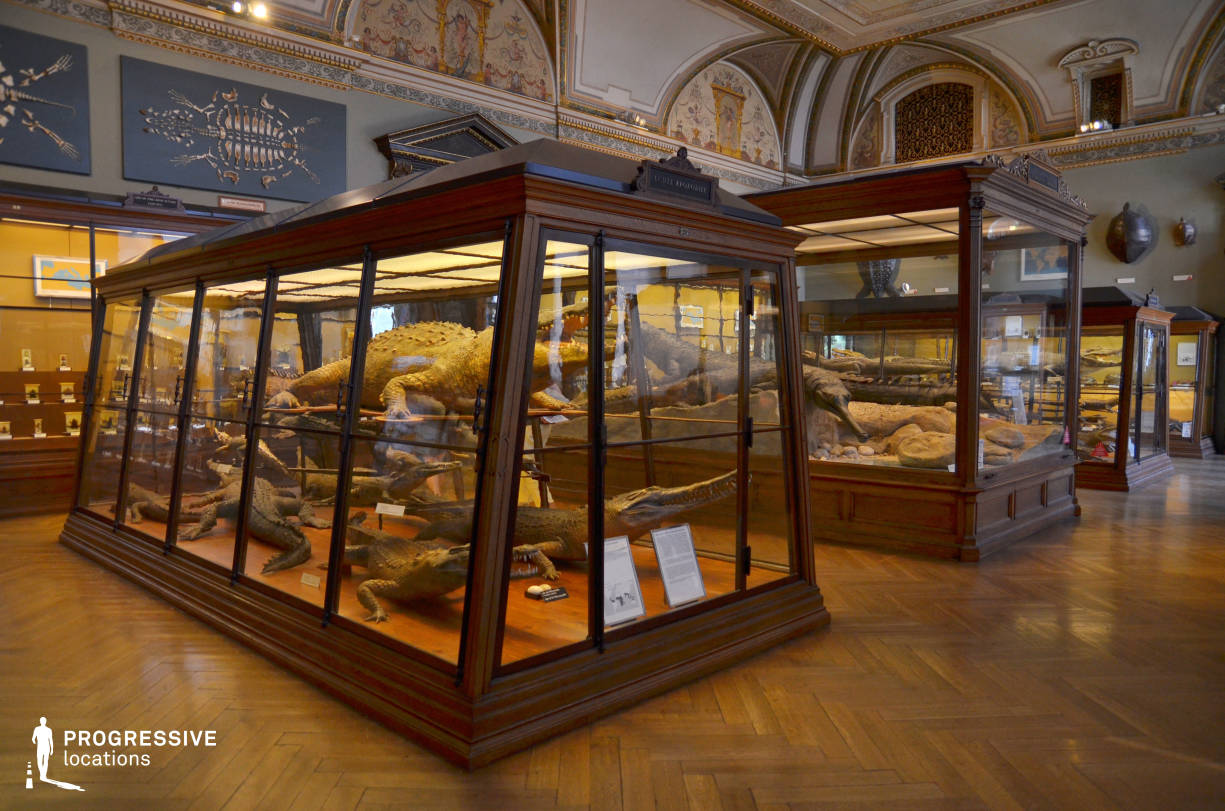 Locations in Austria: Exhibition Cases, Natural History Museum