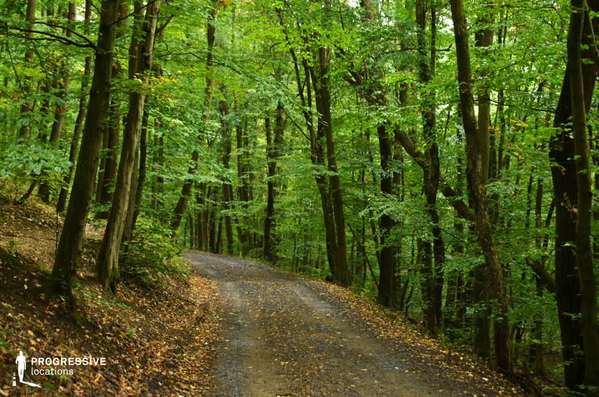 Locations in Hungary: Forest Road, Kiralyret