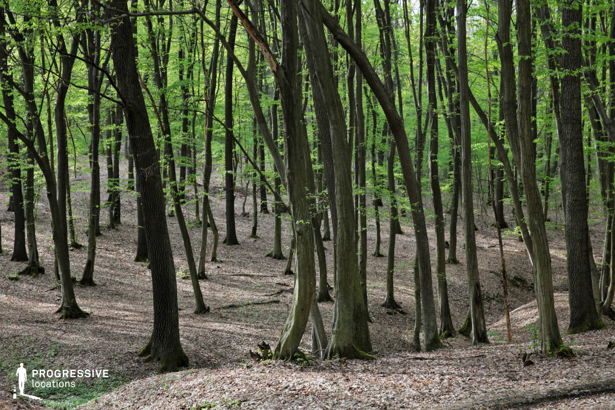 Locations in Hungary: Deep Forest, Imola