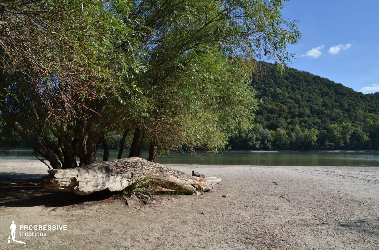 Locations in Hungary: River Shore %26 Tree Log, Danube