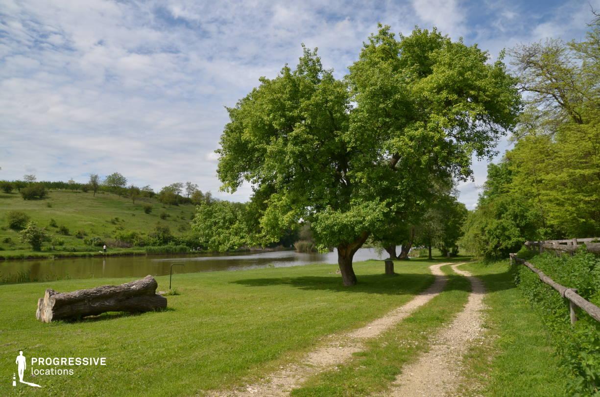 Locations in Hungary: Road %26 Tree Trunk, Etyek Lake
