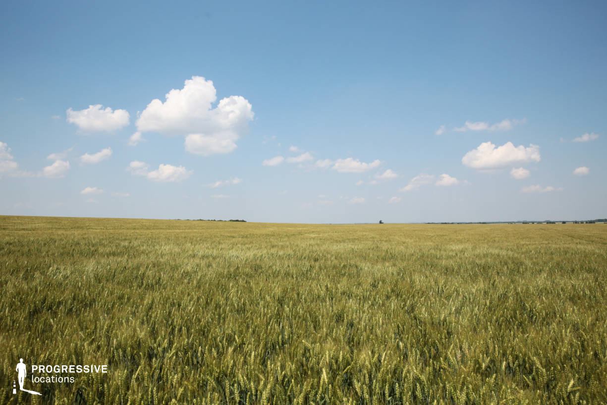Locations in Hungary: Wheat Field, Deg