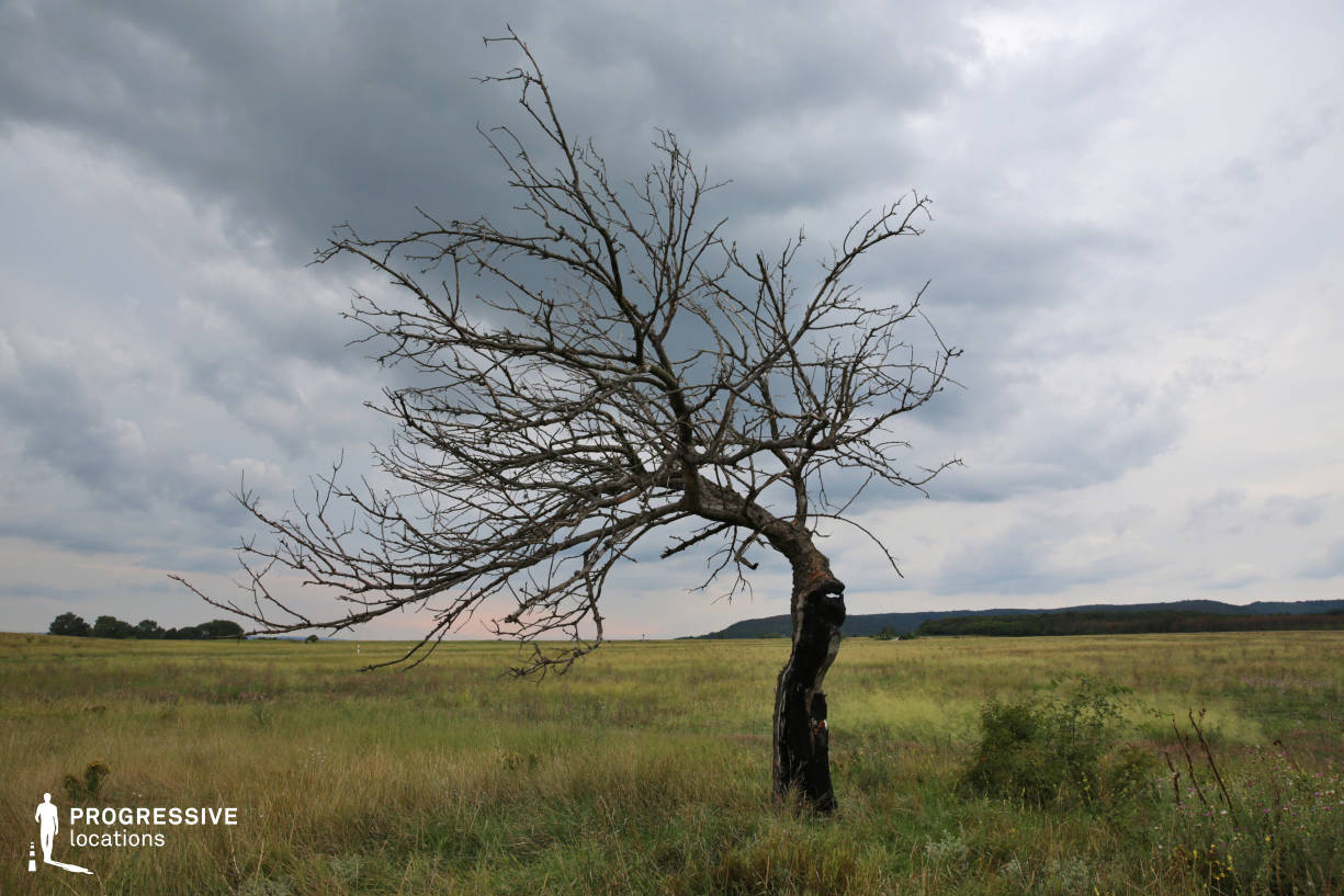 Locations in Hungary: Dry Tree %26 Meadow, Csakvar