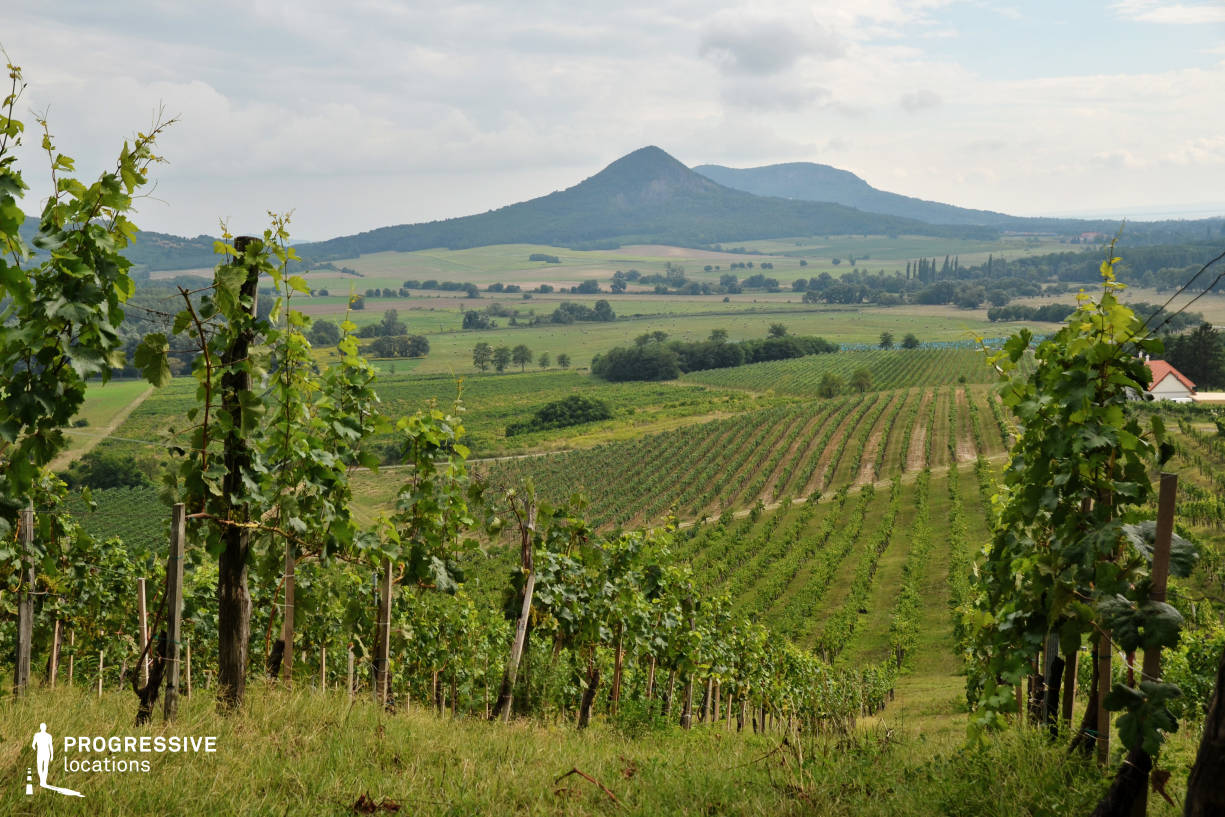 Locations in Hungary: Landscape with Grape, Csopak