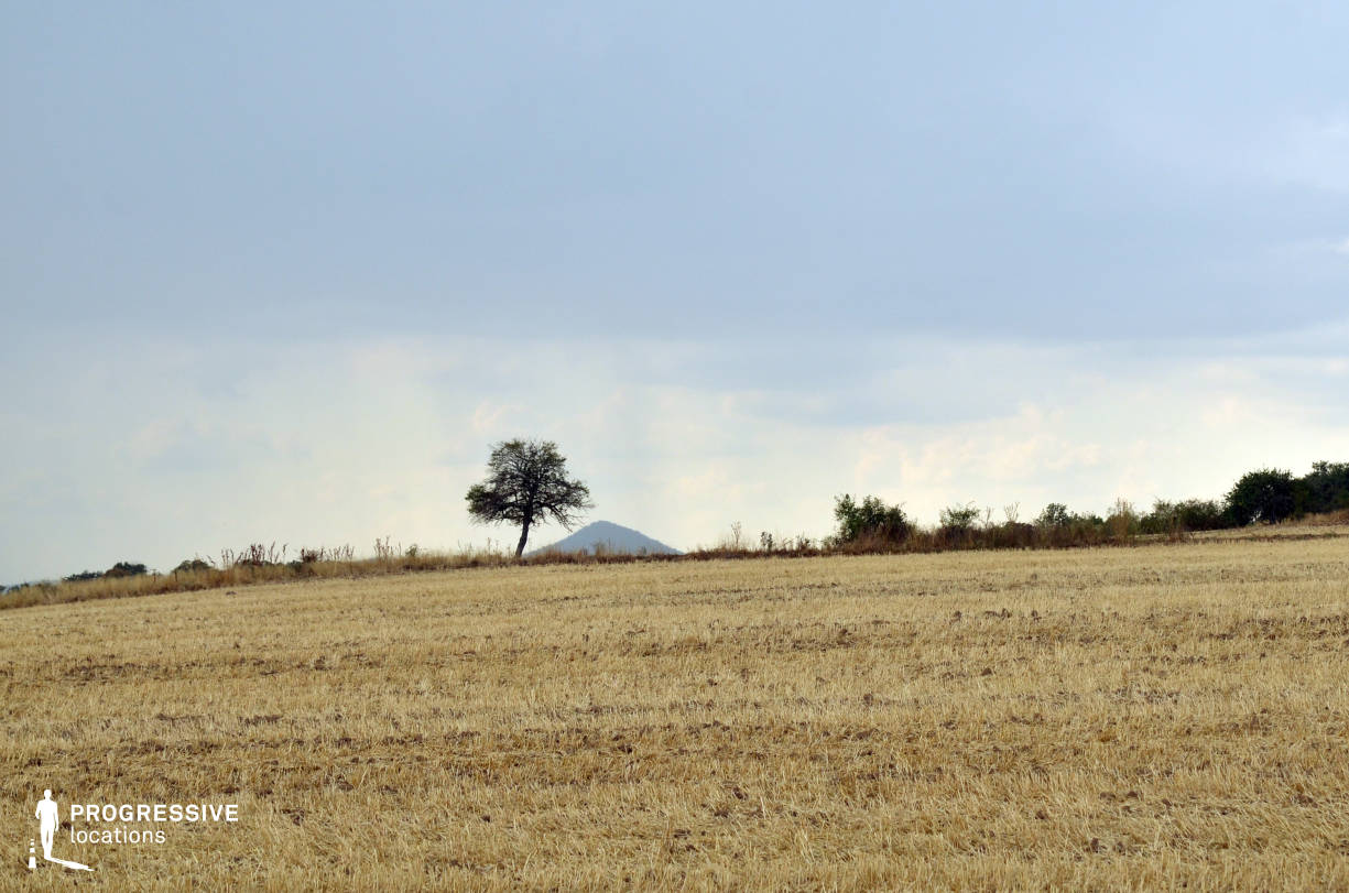 Locations in Hungary: Lonely Tree %26 Ripe Wheat Field, Kospallag