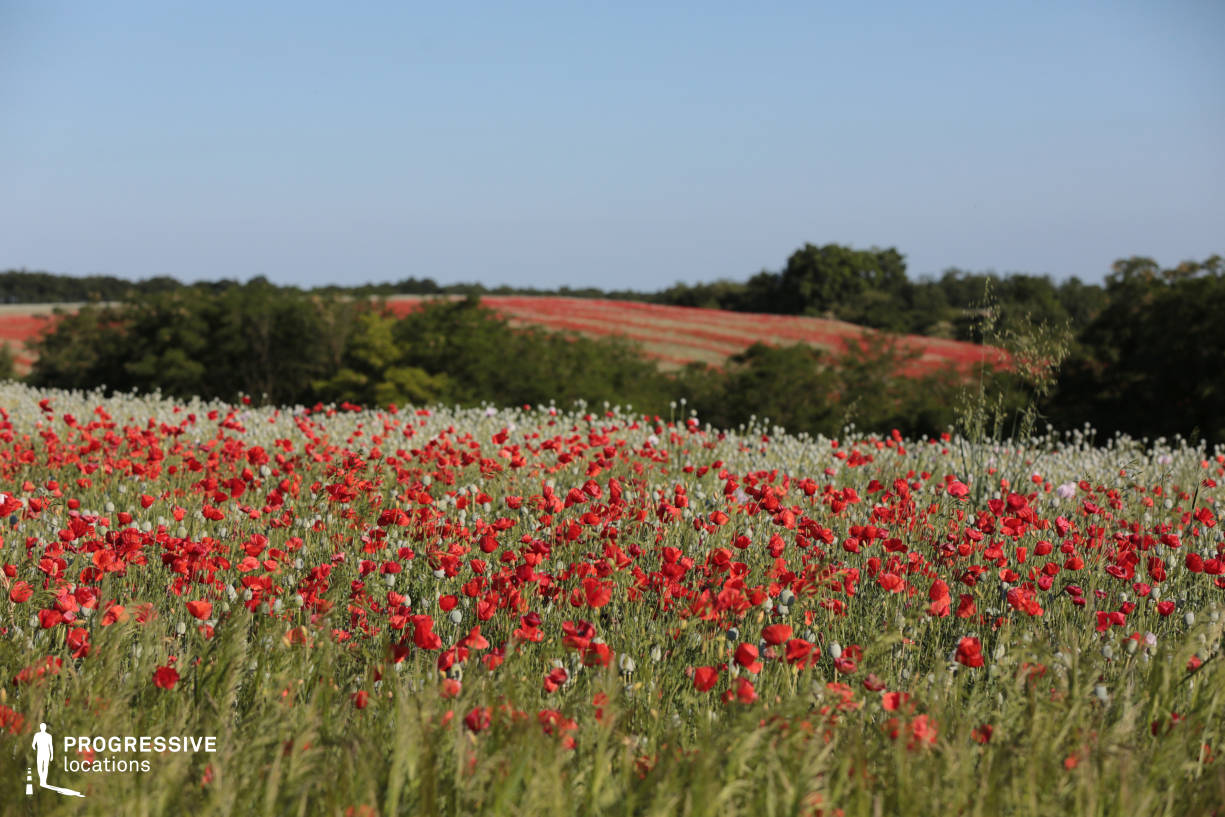 Locations in Hungary: Poppy Field, Nezsa