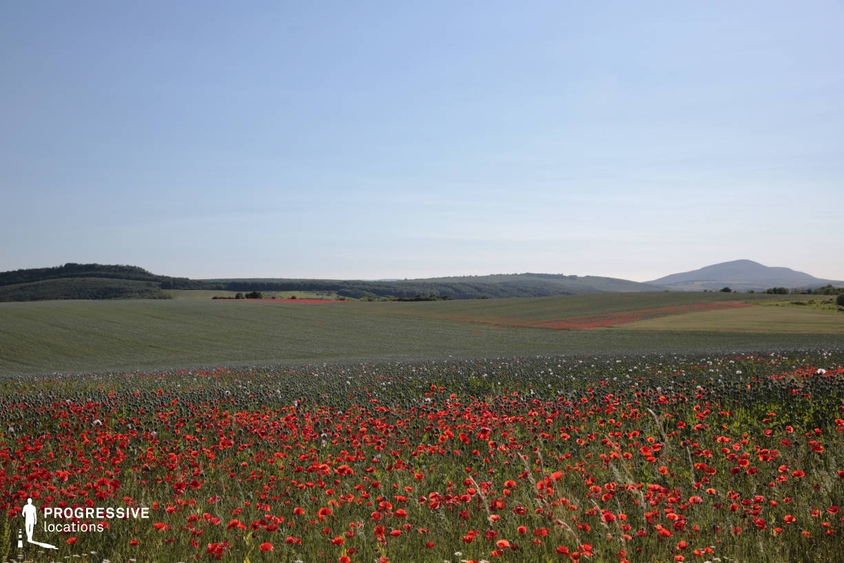 Locations in Hungary: Poppy Fields, Nezsa