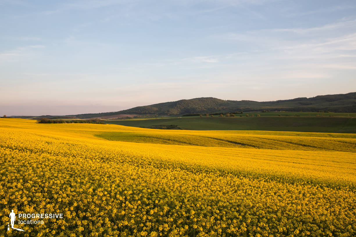 Locations in Hungary: Rape Field, Tarjan