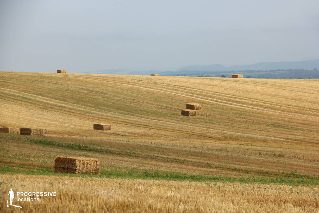Locations in Hungary: Ripe Wheat Field, Biatorbagy