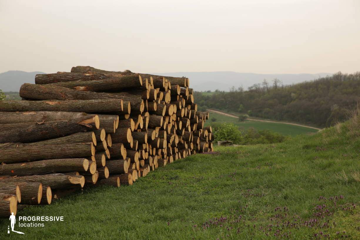 Locations in Hungary: Tree Logs, Kospallag