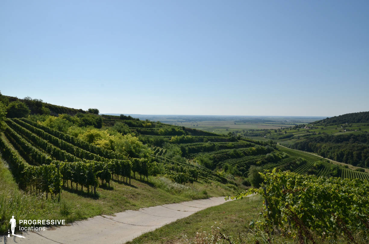 Locations in Hungary: Vineyard Panorama, Villany