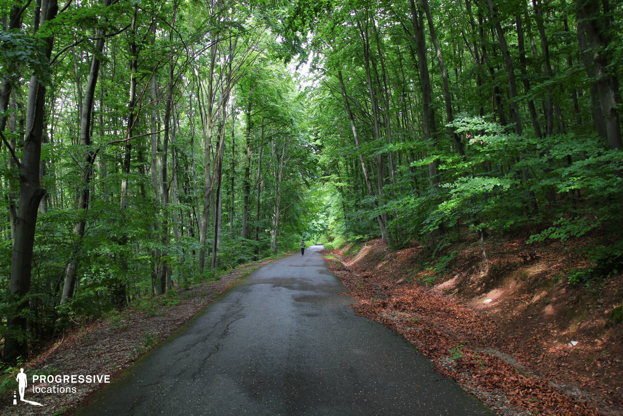 Locations in Hungary: Mountain Forest Road, Bukk