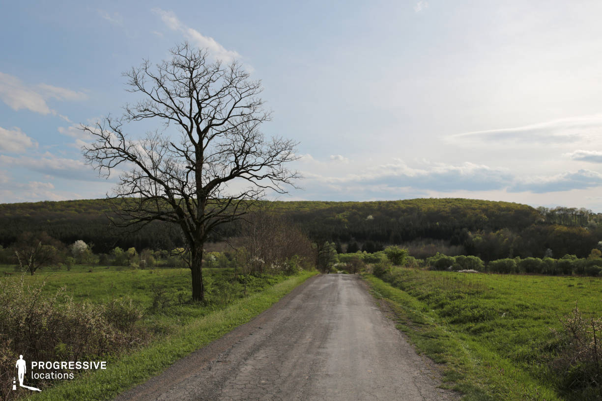 Locations in Hungary: Countryside Road with Tree, Imola
