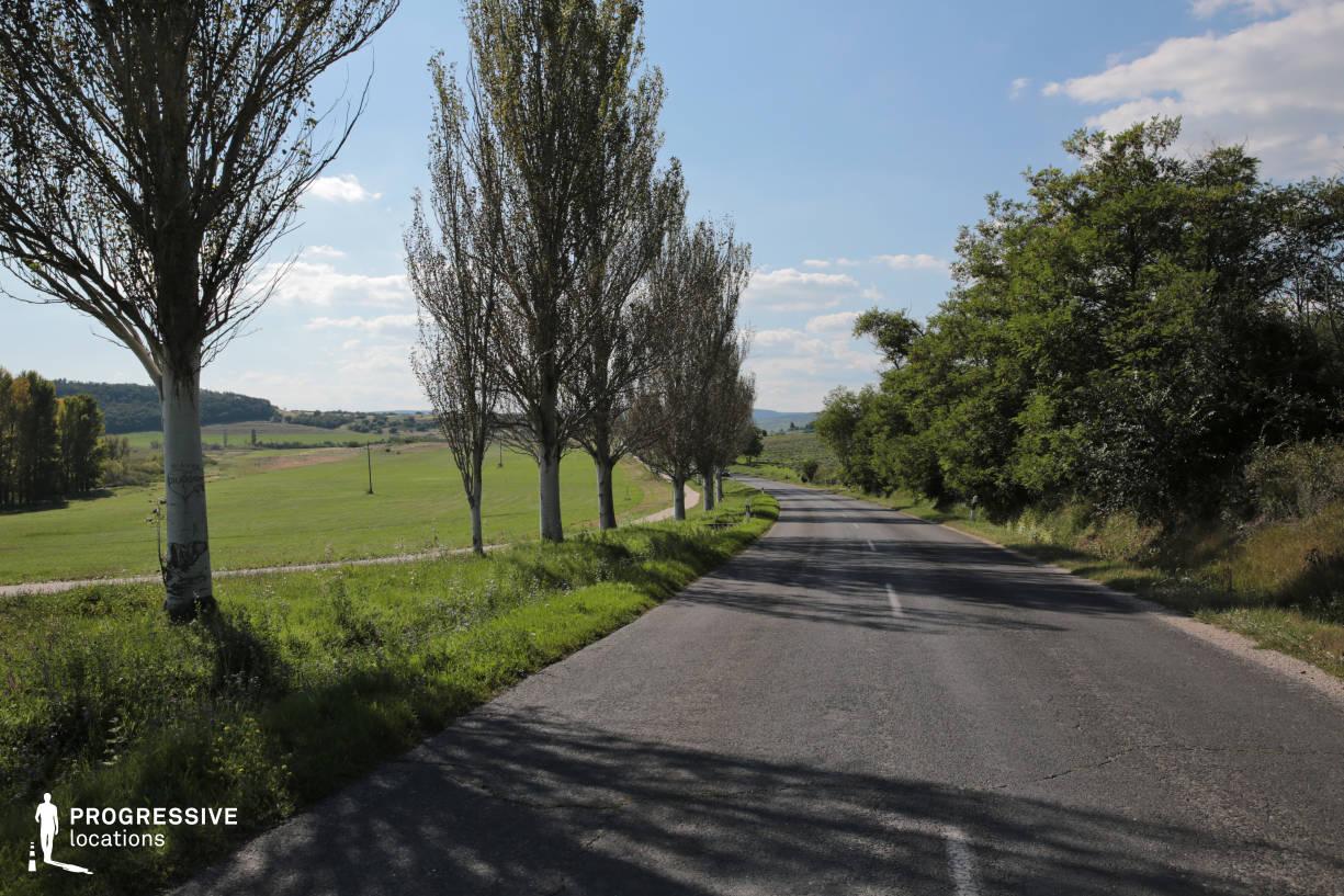 Locations in Hungary: Roadside Trees, Tihany