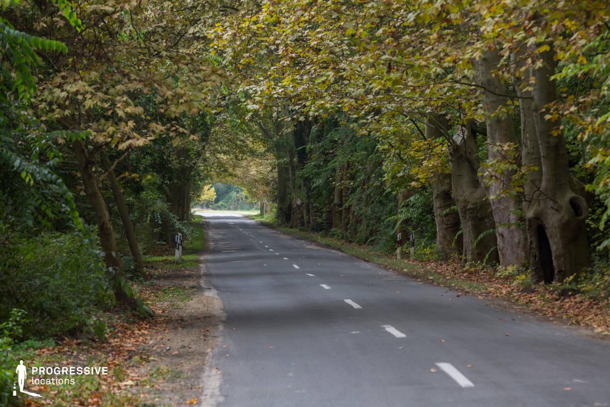 Locations in Hungary: Shady Road, Alcsut