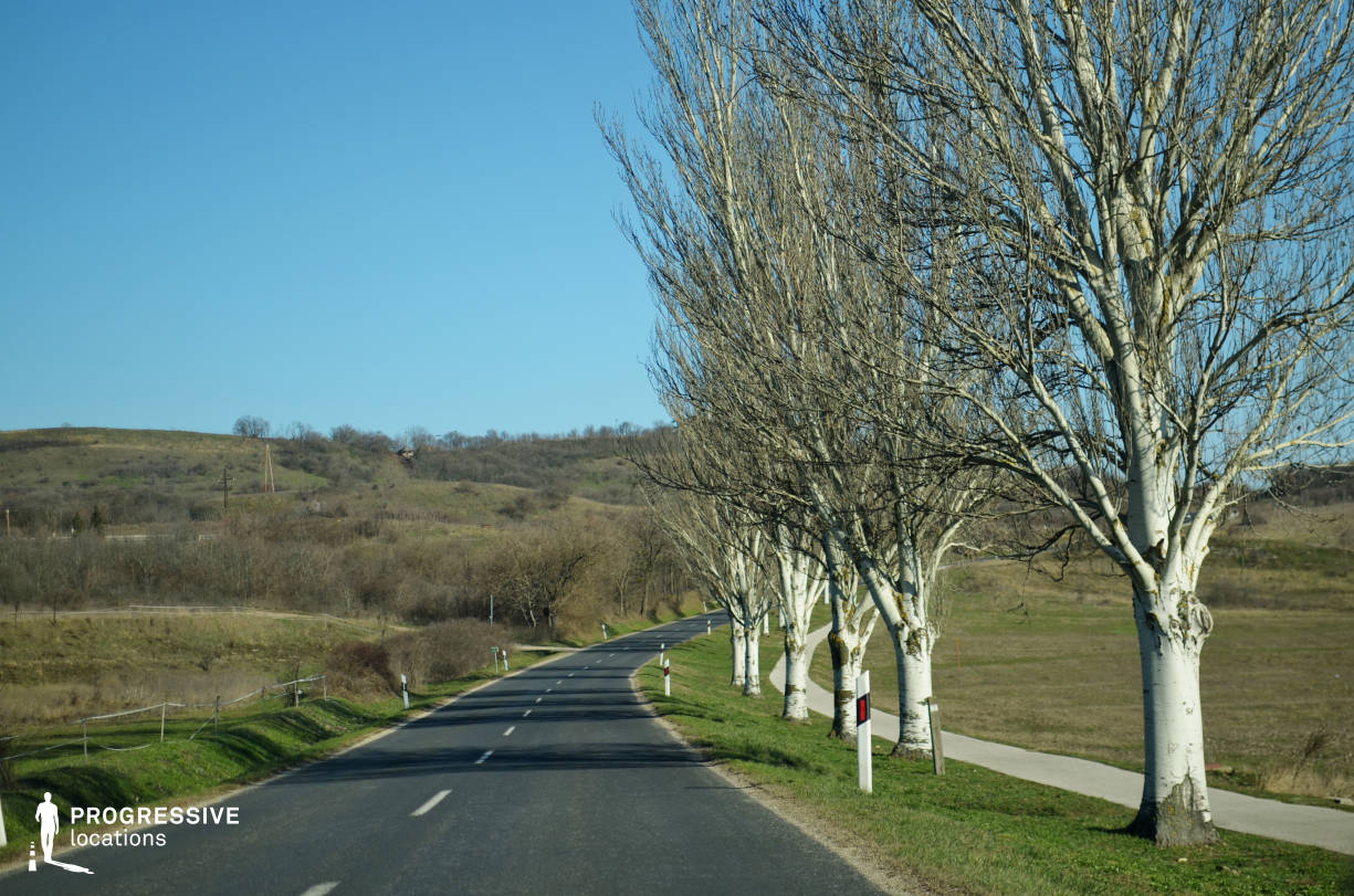 Locations in Hungary: Curvy Road with Trees, Tihany