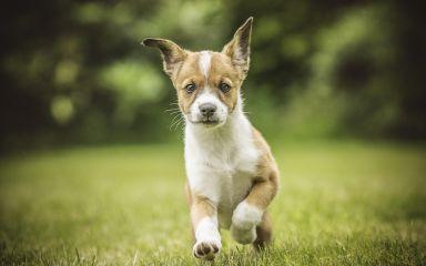 Októbrové akcie pre psov
